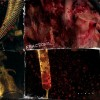 Fractional - Blood (CD)1