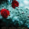 Sara Noxx feat. Mark Benecke - Where The Wild Roses Grow, Boy, Gr. L / Ultimate Fan Edition (Box)1