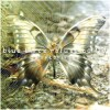 Blue Birds Refuse To Fly - Anapteroma (CD)1